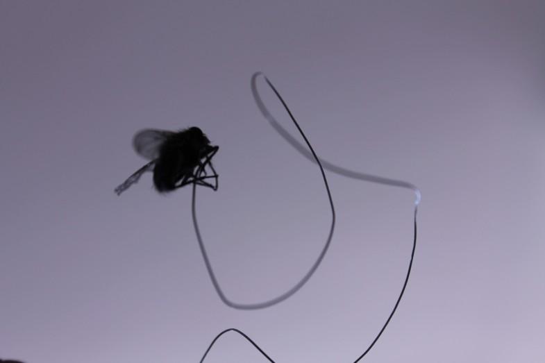 drapierte fliege